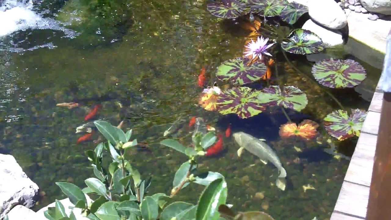 Koi pond with bridge youtube for Koi pond bridge