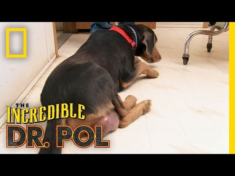 Great Balls of Fire | The Incredible Dr. Pol