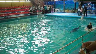 Круг на ките. Ярославский дельфинарий(Сходите, это просто чудо какое-то! Это незабываемо!, 2014-02-23T15:11:13.000Z)