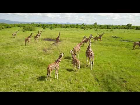Meru National Park Juin 2017