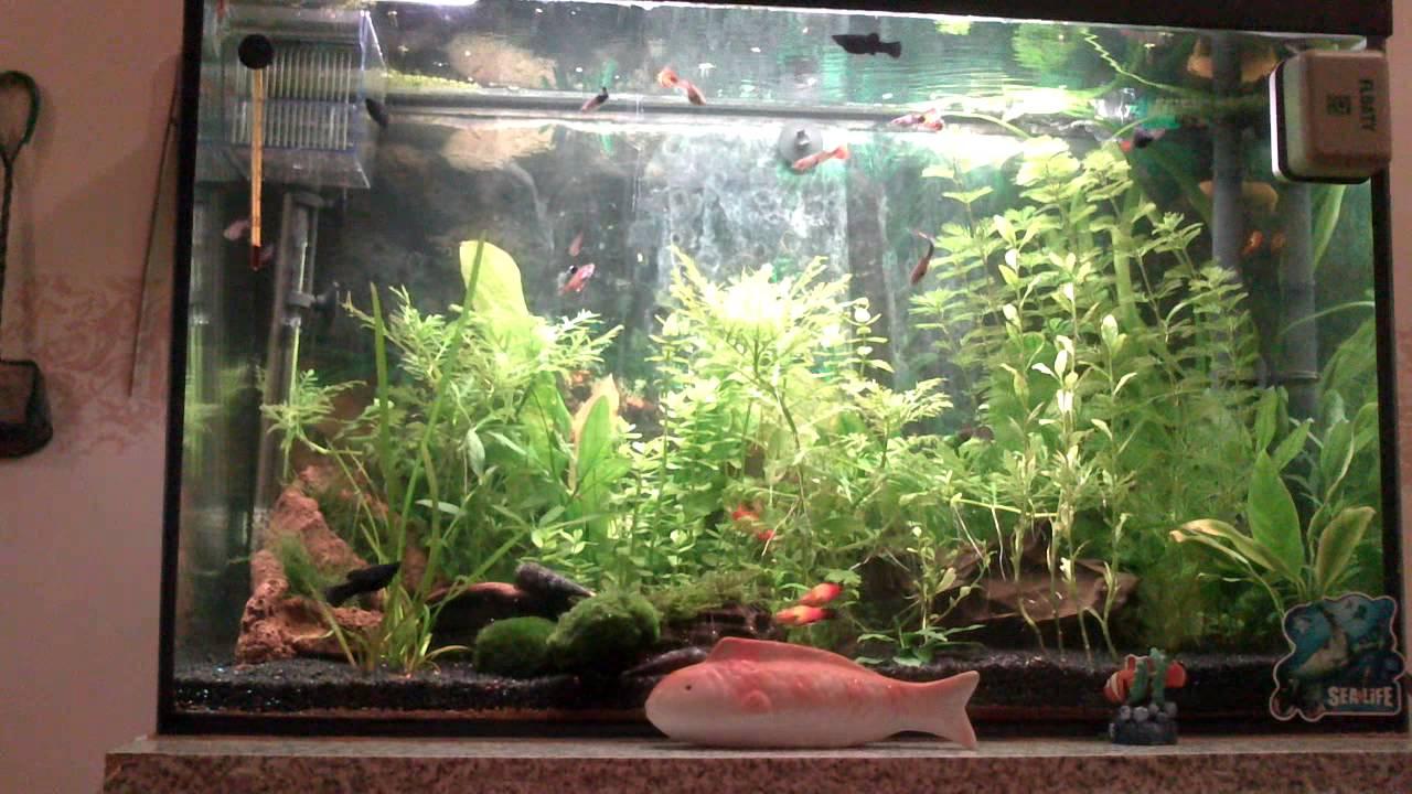 Bevorzugt Aquarium /150 Liter - YouTube YA66