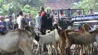 Download Video Pasar Kambing MP3 3GP MP4