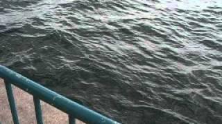 fishingmax泉大津店 11 10なぎさ公園チヌ thumbnail