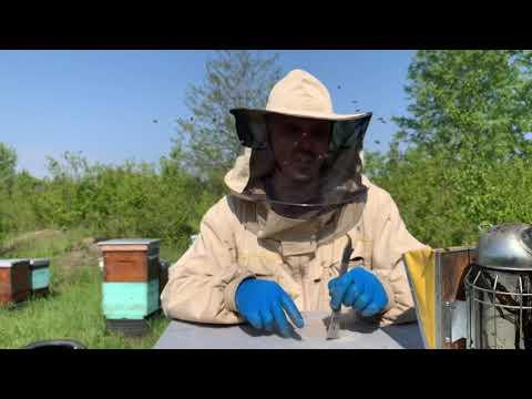 Оновлення бджолиного гнізда. Моя пасіка 9 травня 2020 р.