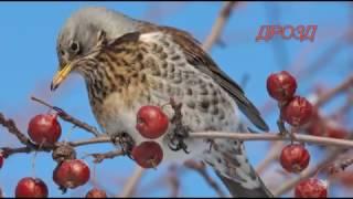 Птицы средней полосы 2017г