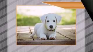 Красивое фото  собак.