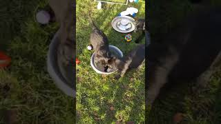 video 1544605920