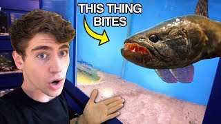 *SCARIEST* Fish EVER... the ULTIMATE PREDATOR?!