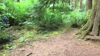 Nehalem Falls Campground, Tillamook State Forest, OR