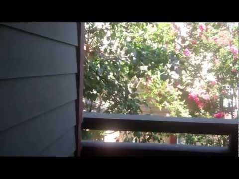 Mill Creek Apartments - Milpitas -  Thoreau - 1 Bedroom