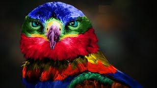 10 Animais Com As Cores Mais Belos E Únicos No Mundo