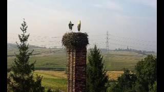 Grzybowice.pl –Bociany na żywo - Zabrze