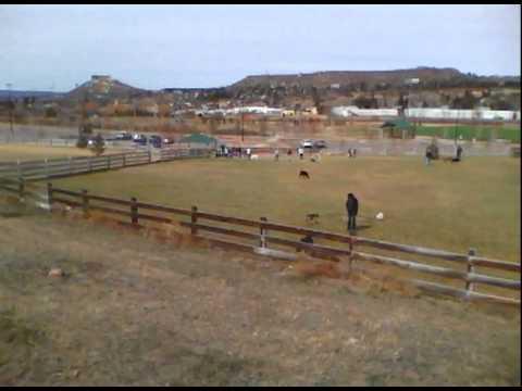 Off Leash Dog Park Castle Rock