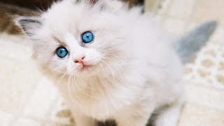 Top 10 Cutest Pet Cats In The World 2014