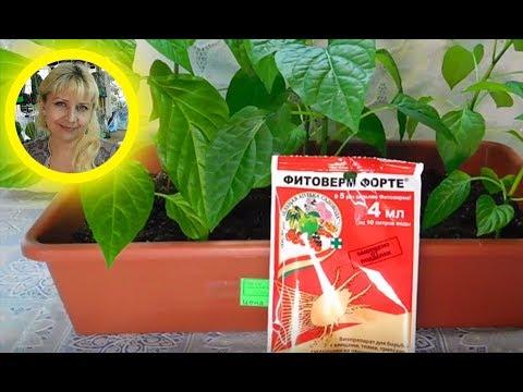 🍅🍅🍅ПАУТИННЫЙ КЛЕЩ НА РАССАДЕ И ЦВЕТАХ ! Как спасти растения !