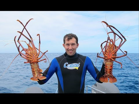 Diving for Jumbo Crays | Perth WA