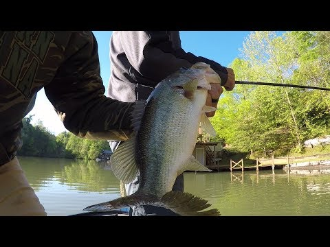 Lake Lure Fishing Guide- Dream Catcher Guides
