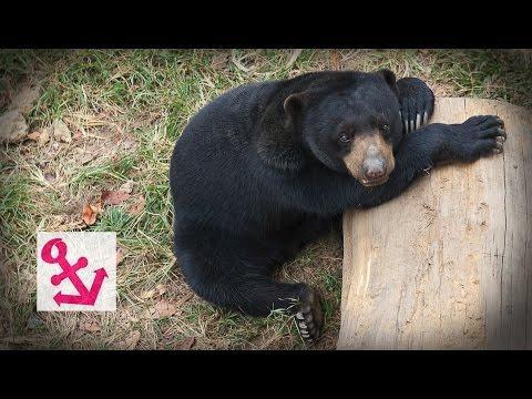 Visit Johor Bahru Zoo in Malaysia