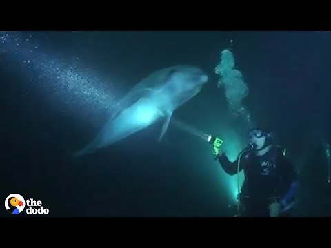 Wild Dolphin Knew Exactly How To Ask People For Help | The Dodo