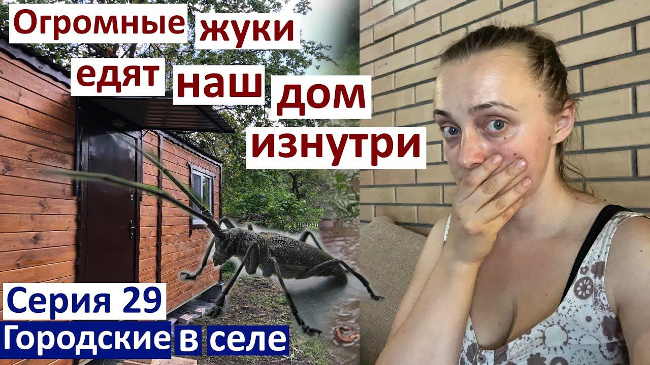 Серия 29. Огромные жуки жрут наш дом изнутри! Лезут из стен( Дима спасет домик. #швидкохата
