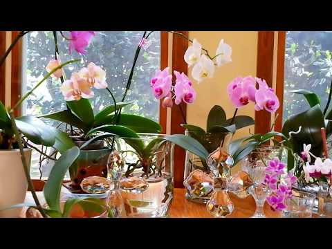 simple-solutions-and-other-things-i-have-learned-about-growing-orchids-in-water-culture.