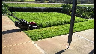 Long wet grass.  Honda and Victor action  V33