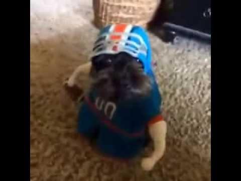 football dog & football dog - YouTube