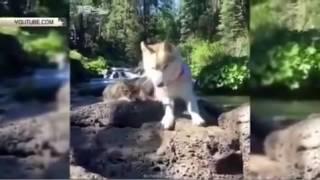Кот, выросший с собакой, думает, что он – пес