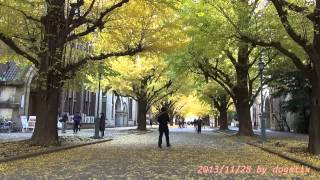 Japan Trip 2013 Hongo Campus Ginkgo tree-lined University of Tokyo  16