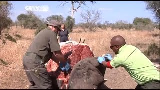 South Africas Kruger National Park Faces Challenges on Poachers