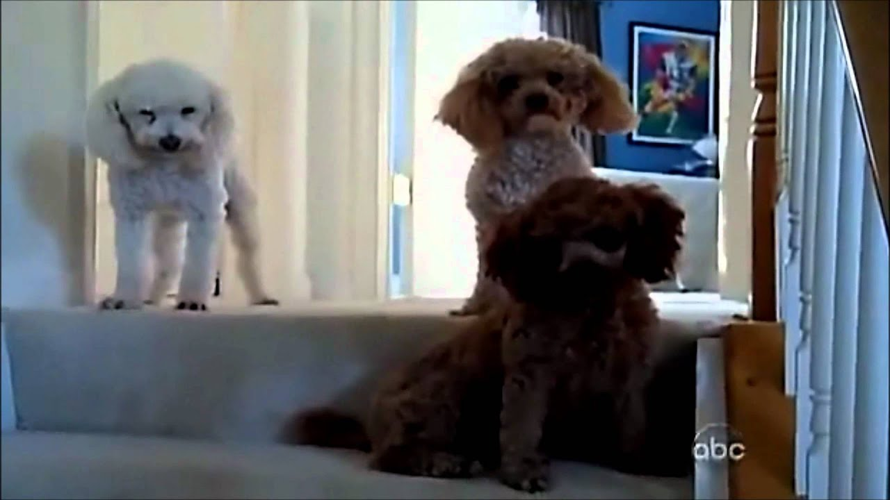 Funny Dog Videos  Made Mess