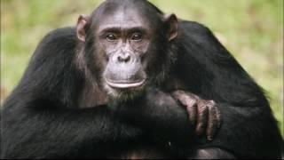 ТОП 10   Самые дорогие животные   Фото и описание животных