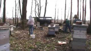 Commercial Beekeeping Install Package Bees In Entire Apiary Part 3