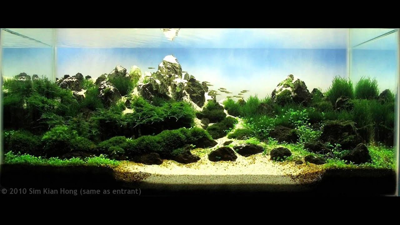 Beautiful Planted Aquariums 2 Youtube
