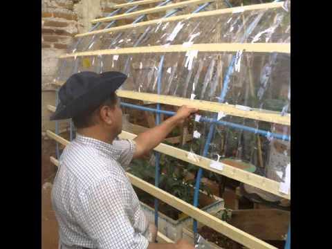 Invernadero casero economico botellas plastica youtube - Invernadero casero terraza ...