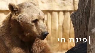 בוקר דוב: אחרי שינה של חודשיים - אלברט מחפש חברים
