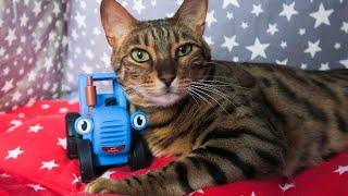 Синий Трактор и Тайная Жизнь Домашних Животных.  Мультик для детей