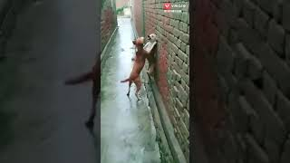 Dog's best action /comedy/😂😂😂😂
