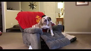 reuben-the-bulldog-burn-baby-burn