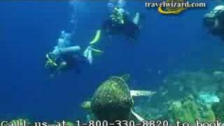 Bonaire Vacations, Hotels, Attractions