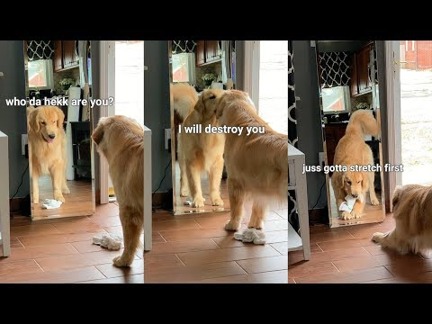 This is What Happens When My Dog Sees His Reflection - Puppy Vs. Mirror