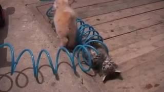 Котятки играют