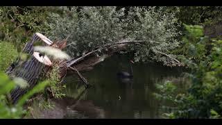 Documentaire: De Geleenbeek ( Trailer )
