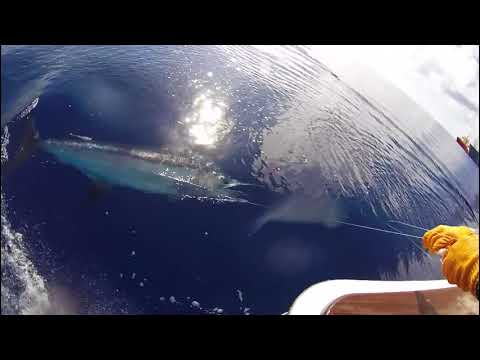 Reel Fire Summer 2016 Gulf of Mexico Marlin Fishing
