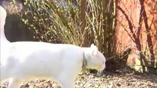 Kitty Cat & Dogs English Springer Spaniels High Speed 120fps Casio