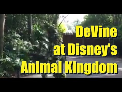 DeVine at Disney's Animal Kingdom | Walt Disney World