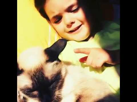 Funny Cat Attack on Child