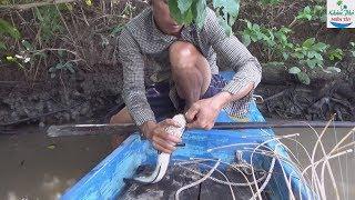 72 | Cắm câu mồi này cá nào mà chịu nổi | fishing