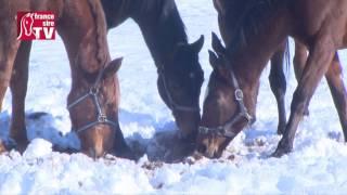 Elevage Detouillon dans le Jura (Haras de Longechaux) sous la neige