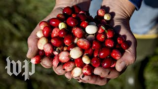 Could cranberries have health benefits for women?